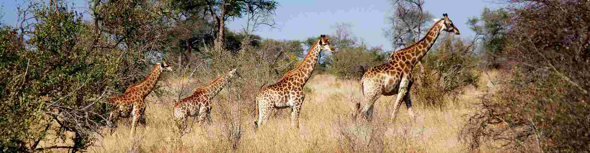 Intrepid Travel South Africa Reviews
